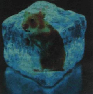Замороженная мышь в кубике льда