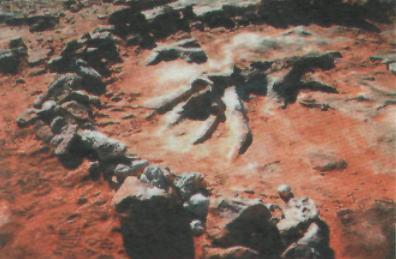 Породы времен гибели динозавров